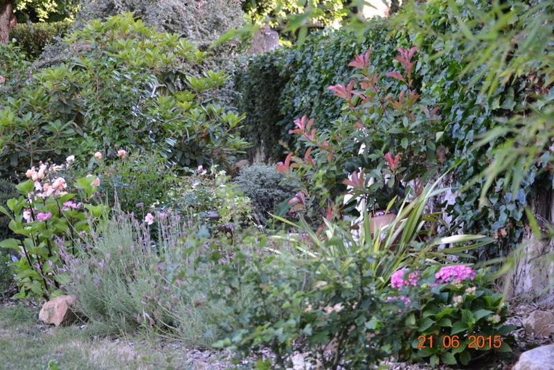Espace verdure fleurie